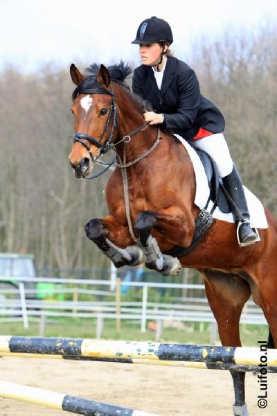 Paardrijden Aalsmeer - Amstelveen | Manege Stal de Brink